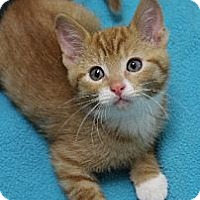 Adopt A Pet :: Finbar - Chicago, IL