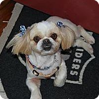 Adopt A Pet :: Asia - Chantilly, VA