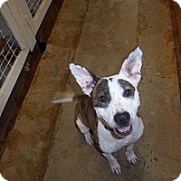 Adopt A Pet :: Katie - Windsor, MO