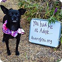 Adopt A Pet :: Molly - SPONSORED - Oakland, CA