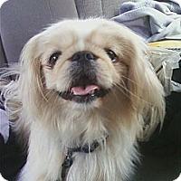 Adopt A Pet :: Hurricane - Portland, ME