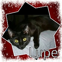 Adopt A Pet :: Lupe - West Lafayette, IN