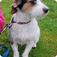 Adopt A Pet :: Dexter - Gig Harbor, WA