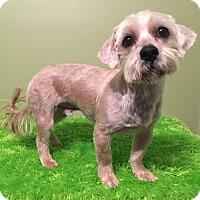 Adopt A Pet :: Garrett - Russellville, KY
