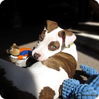 Adopt A Pet :: Grace and sisters - Chattanooga, TN