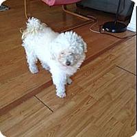 Adopt A Pet :: Spam - Huntington Beach, CA