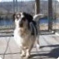 Adopt A Pet :: Tango - Farmingtoon, MO