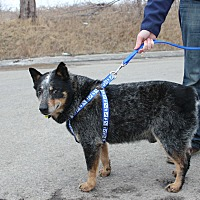 Adopt A Pet :: Bear (Kevin) - Guelph, ON