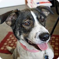 Adopt A Pet :: Chloe - Hillsboro, IL