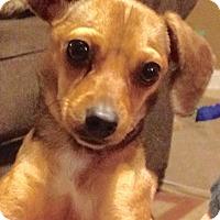 Adopt A Pet :: Kandi - Jasper, TN