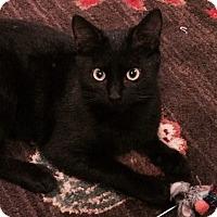 Adopt A Pet :: Ace - Marietta, GA