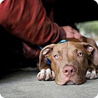 Adopt A Pet :: Jonathan - Los Angeles, CA