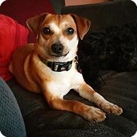 Adopt A Pet :: Fin - Willingboro, NJ