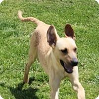 Adopt A Pet :: Lizzie (AKA HAPPY TAIL) - Harmony, Glocester, RI