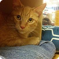 Adopt A Pet :: Curly - Scottsdale, AZ