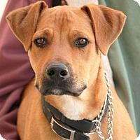 Adopt A Pet :: Earl - Palmdale, CA