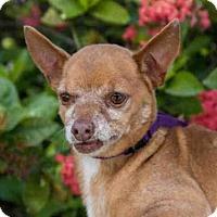 Adopt A Pet :: JEB - West Palm Beach, FL