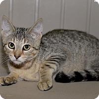 Adopt A Pet :: Karl - Medina, OH
