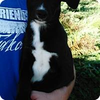 Adopt A Pet :: Eddie - Denver, IN