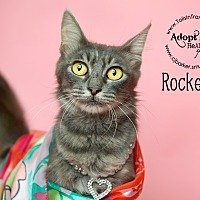 Adopt A Pet :: Rockette - Friendswood, TX
