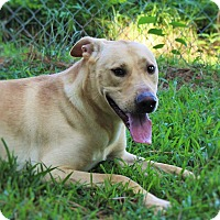 Labrador Retriever Mix Dog for adoption in Murphysboro, Illinois - Hero