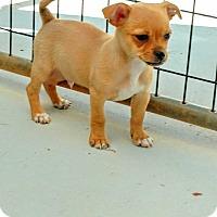 Adopt A Pet :: Pez - Barnesville, GA