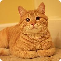 Adopt A Pet :: Calvin - Carlisle, PA
