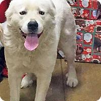 Adopt A Pet :: Simone - Beacon, NY