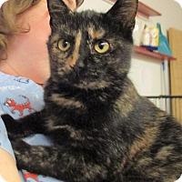 Adopt A Pet :: Adele - Reeds Spring, MO