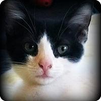 Adopt A Pet :: Andy - Ocean Springs, MS