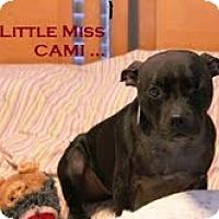 Adopt A Pet :: Cami - Rowlett, TX