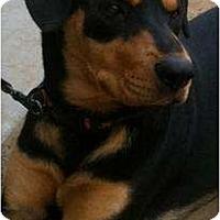 Adopt A Pet :: Juno - Fresno, CA