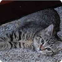Adopt A Pet :: Little Mikey - Colmar, PA