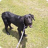 Adopt A Pet :: Blake - Adamsville, TN