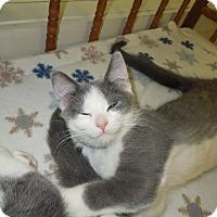 Adopt A Pet :: Grant - Medina, OH