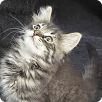 Adopt A Pet :: Brody - Davis, CA