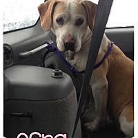 Adopt A Pet :: Esra - Courtesy Listing - Wilmington, DE
