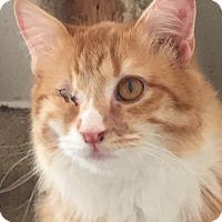 Adopt A Pet :: Dewey - McKinney, TX