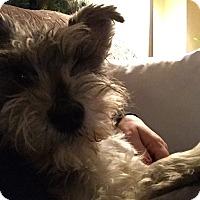 Adopt A Pet :: June - Laurel, MD