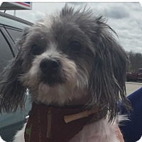 Adopt A Pet :: Willy - LEXINGTON, KY