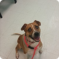 Adopt A Pet :: Toby - Nashville, TN
