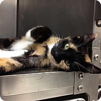 Adopt A Pet :: T-6 - Triadelphia, WV