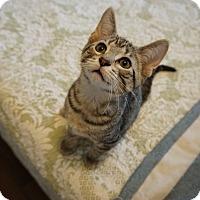 Adopt A Pet :: Hazlitt - St. Louis, MO