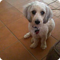 Adopt A Pet :: Sunny - Golden Valley, AZ