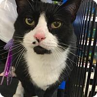 Adopt A Pet :: MONROE! - Philadelphia, PA