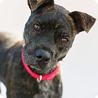 Adopt A Pet :: Icy - Marietta, GA