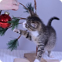 Adopt A Pet :: Alexandra - Virginia Beach, VA