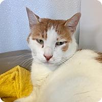 Adopt A Pet :: Bentley - Greensburg, PA