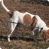 Adopt A Pet :: Mario - Maynardville, TN