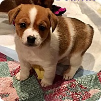 Adopt A Pet :: Peanut - Milton, GA